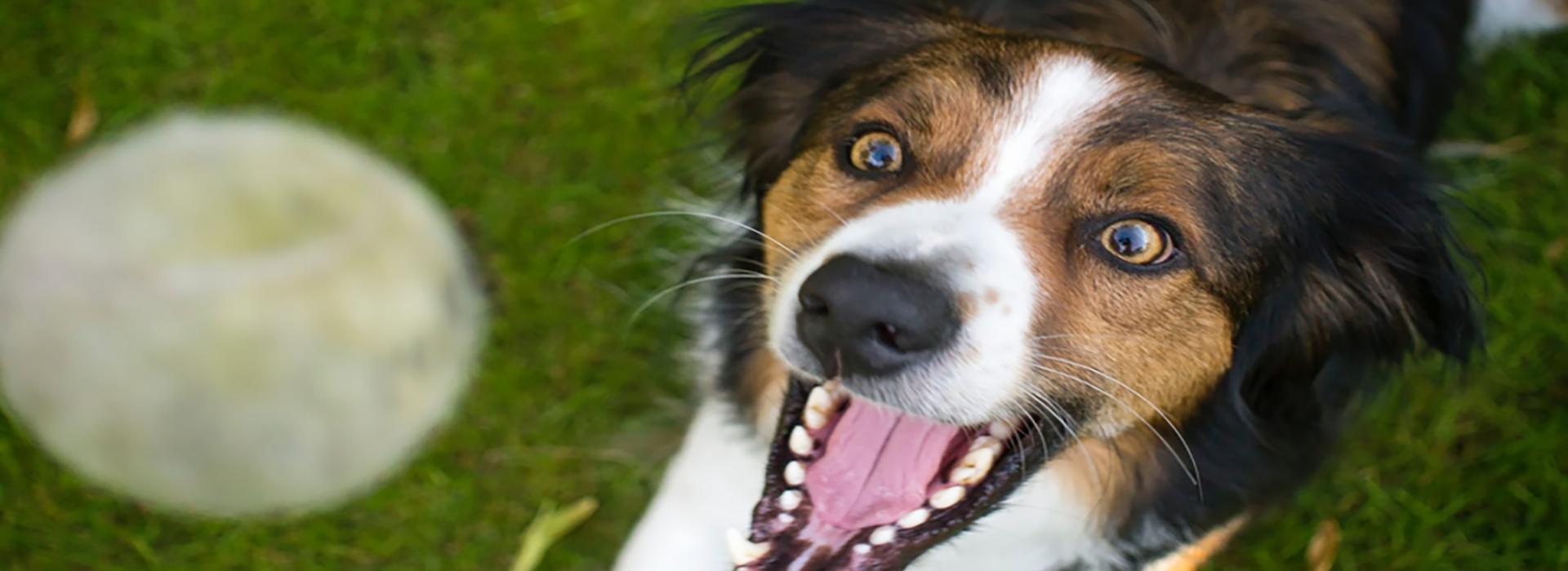 gros plan d'un chien avec la bouche ouverte