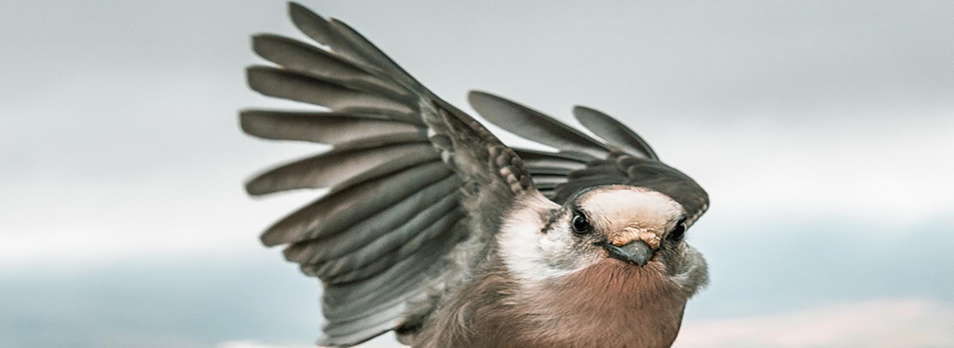 close up of a bird in flight