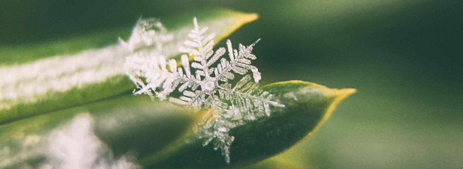 snowflake on a green leaf
